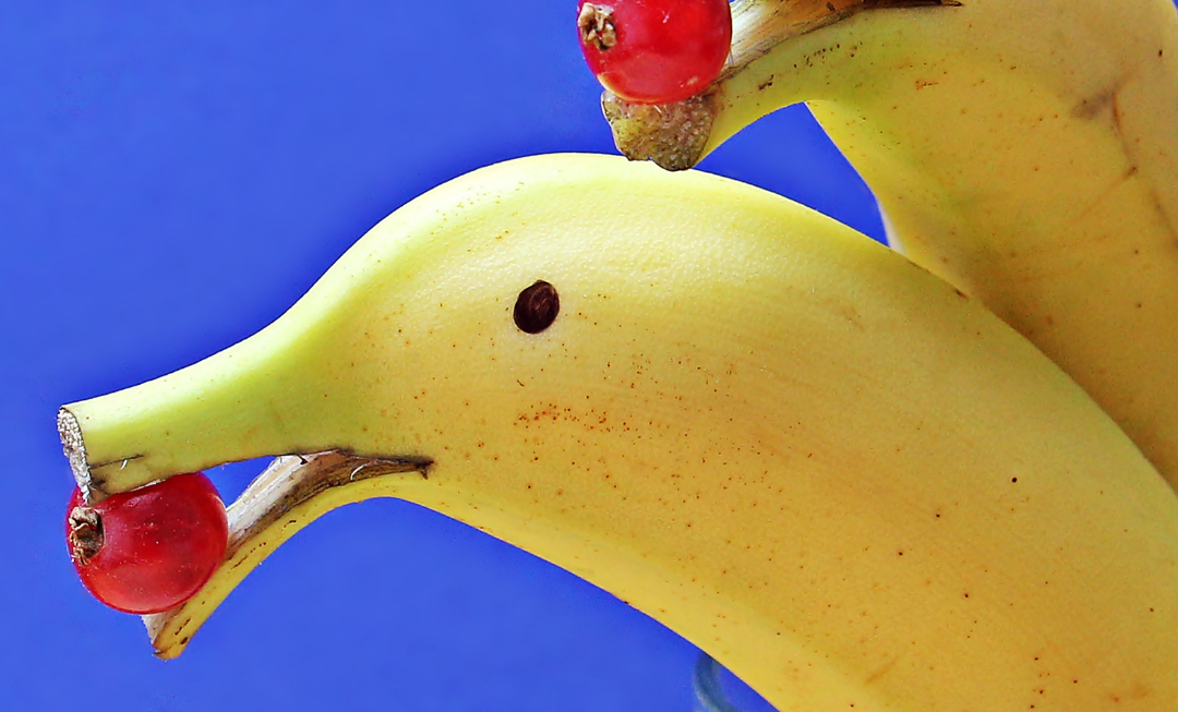 10 grappige DNA weetjes die de meeste mensen niet weten